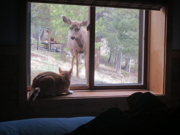 Professor v. Bambi